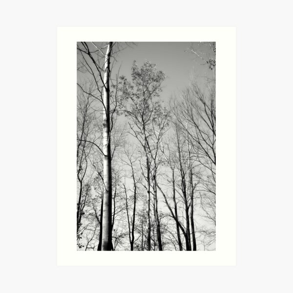 The Forest Lou Campbell State Nature Preserve Art Print