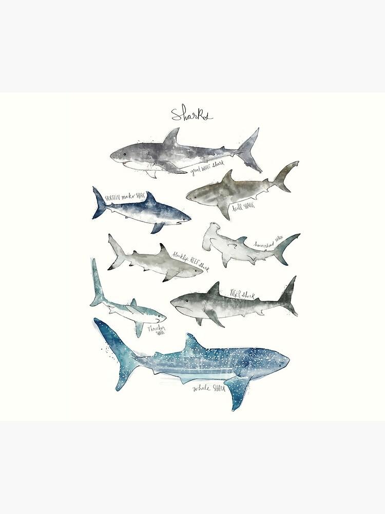Sharks by AmyHamilton