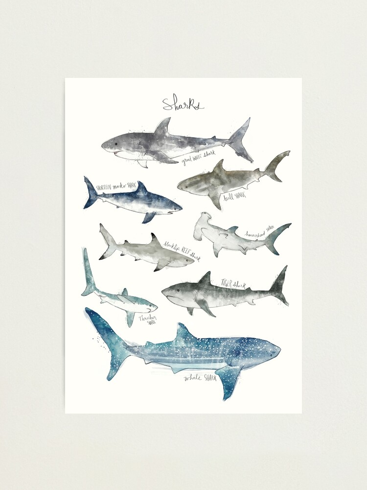 Alternate view of Sharks Photographic Print
