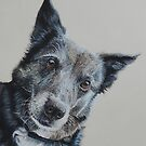 Maggie the Border Collie by cathyscreations
