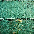 Wall Flower by eleveneleven