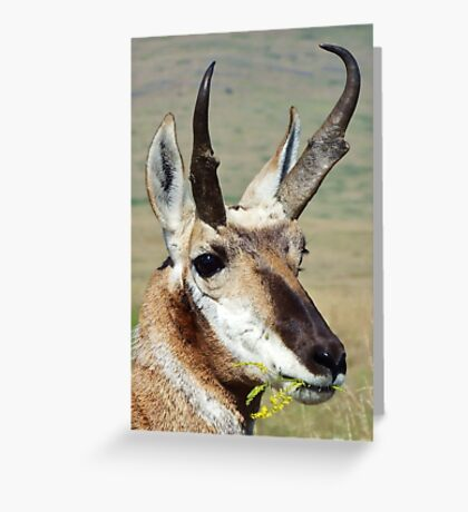 Prong Horn Greeting Card