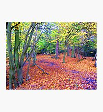 Carpeted Woodland Photographic Print