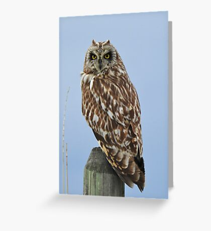 Shorteared Owl Greeting Card