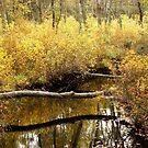 Golden Creek by Sharon Woerner