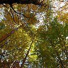 Autumn kaleidoscope by Maria1606