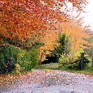 Autumn glow by Spiritmaiden