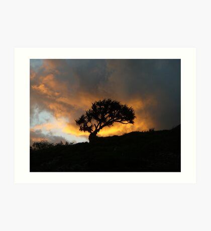Lone Tree in the Sunset Art Print