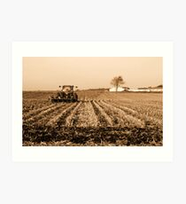 Harvested Art Print