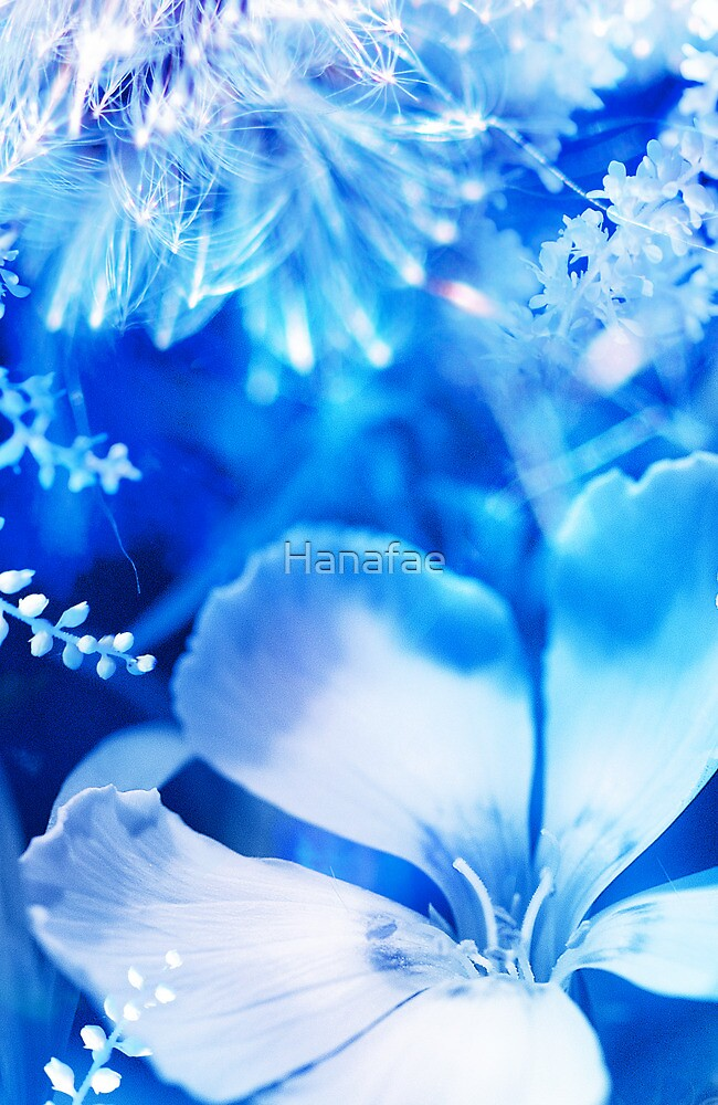 Soft Shadows II by Hanafae