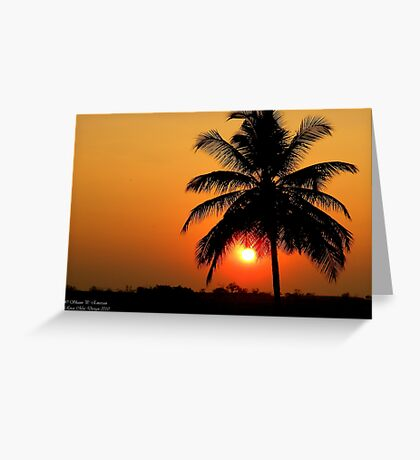 Palm Sunset Greeting Card