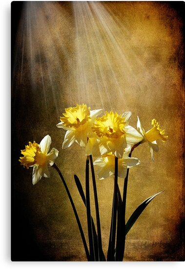 Spring Sun by Lois  Bryan