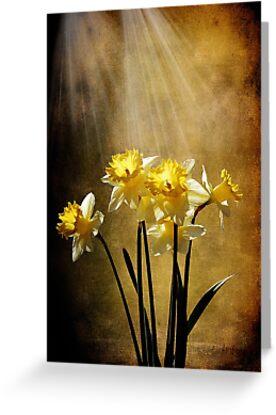Spring Sun by Lois  Bryan