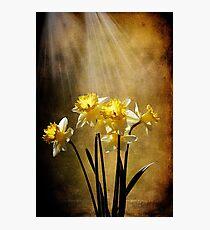 Spring Sun Photographic Print