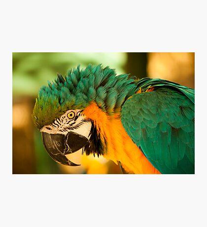 Long Beak! Photographic Print