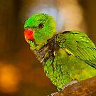 Red beak! by vasu