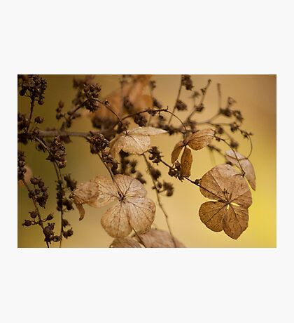 Beauty of Dry Leaf! Photographic Print
