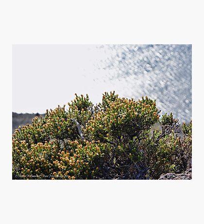 Long Leap Down Photographic Print