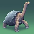 Galapagos Tortoise by Tami Wicinas