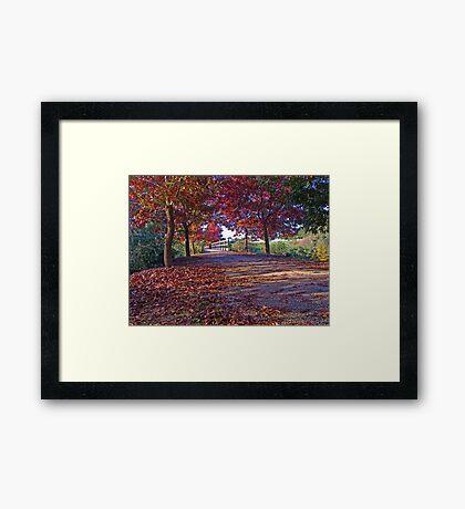 Autumn Leaves Framed Print
