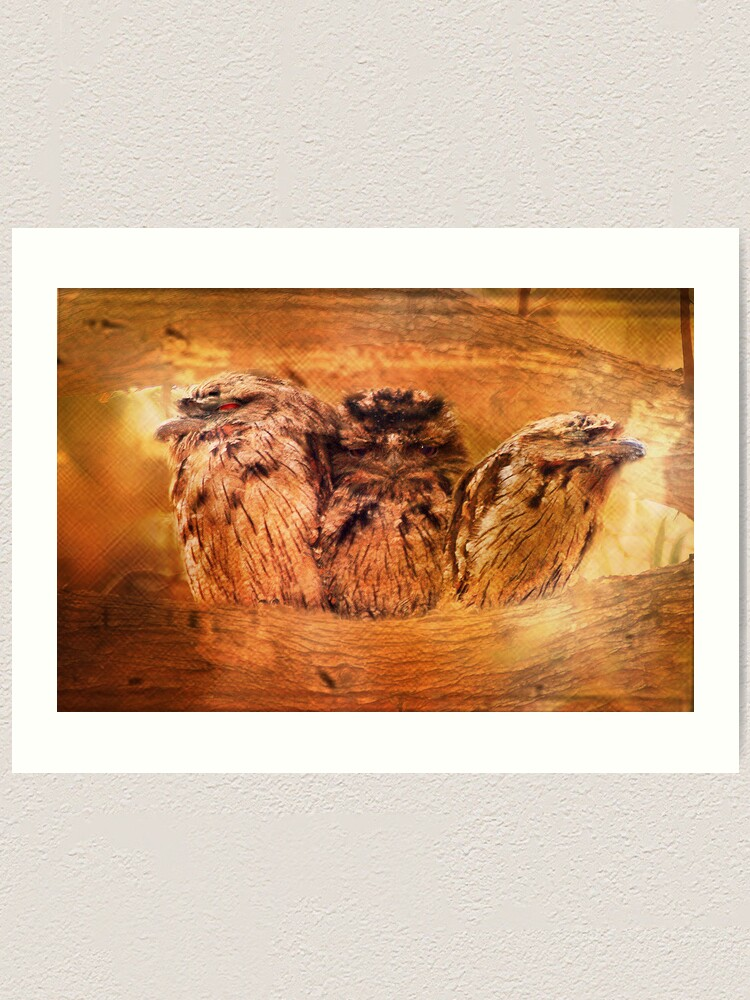 Alternate view of Tawny Frogmouth Art Print