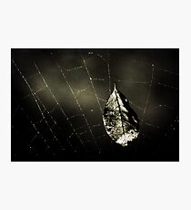 Trapped Photographic Print