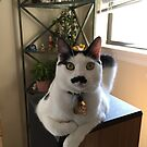 Mustache Cat on Stereo  by fairielights