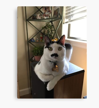 Mustache Cat on Stereo  Canvas Print
