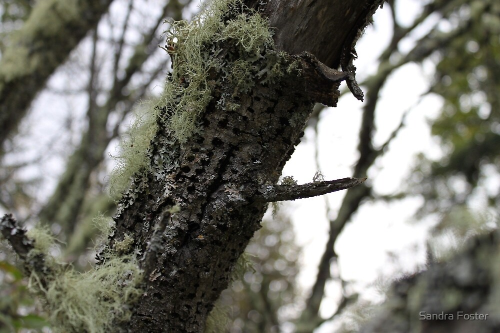 Lichen And Wood Pecked Leaning Tree Log by Sandra Foster