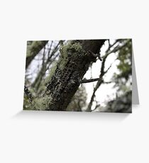 Lichen And Wood Pecked Leaning Tree Log Greeting Card