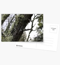 Lichen And Wood Pecked Leaning Tree Log Postcards