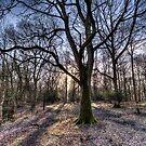 Wald am frühen Morgen von Londonimages