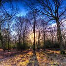 Der Morgensonnenwald von Londonimages