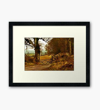 Haldon Forest in Autumn Framed Print