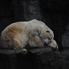 Sleeping Polar bear untouched by Tom Grieve