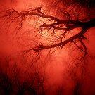 Arterial by Anna Creedon