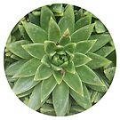 Succulent 1 by bealice