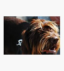 Shaggy Photographic Print