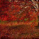 a dark autumn by LizzieMorrison