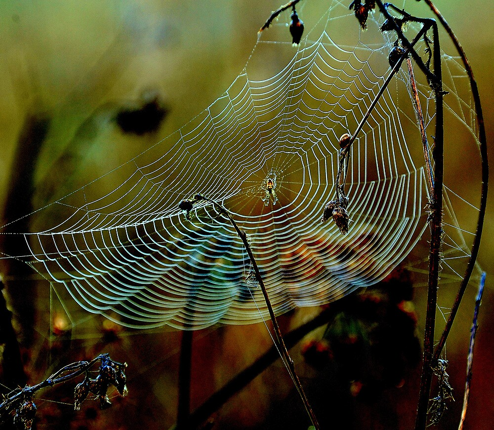 Web sight by Alan Mattison