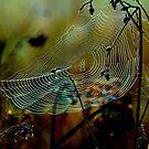 Web sight by Alan Mattison