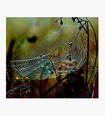 Web sight Photographic Print