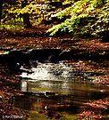 Sulpher Springs Falls by Marcia Rubin