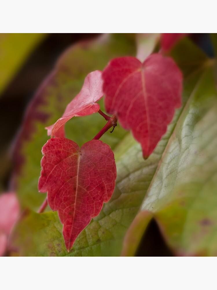 Foglie d'autunno by rapis60