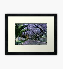 An avenue of jacarandas. Parkview, Johannesburg, South Africa Framed Print