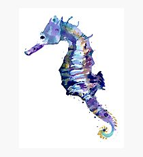 Watercolor Seahorse Photographic Print