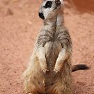 Meerkat manor by Bluebelly