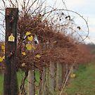 Winter vinyard 2 by Bluebelly
