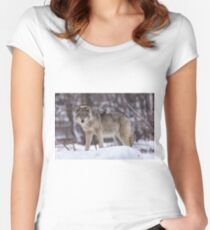 Timber wolf in winter Women's Fitted Scoop T-Shirt