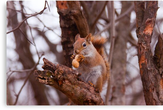 Got a nut???? by Josef Pittner